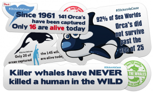 10 Free Orca Whales Stickers