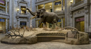 Take A Virtual Tour Of The Smithsonian National Museum Of Natural History