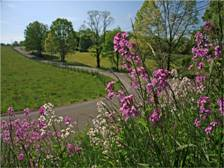Free 2015 Roadsides In Bloom Calendar