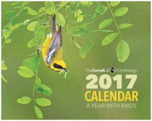 Free 2017 A Year With Birds Calendar