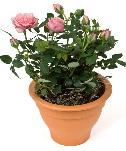 Free Plants?