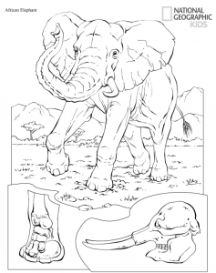 national geographic coloring pages Free Printable Animals Coloring Pages From National Geographic Kids national geographic coloring pages