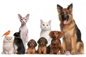 WomensForum Pet Survey - Win A $100 Amazon Gift Card
