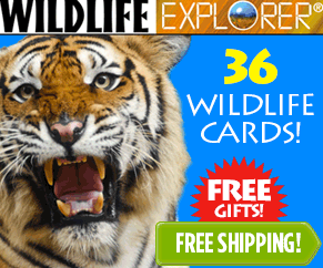 Freebies When You Sign Up For Wildlife Explorer Children's Learning Cards