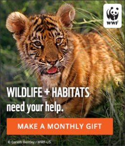 Free Thank You Gift When You Donate To The World Wildlife Foundation
